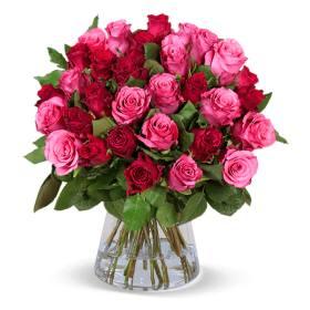 30 rot-pinke Rosen