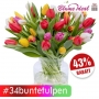 34 bunte Tulpen